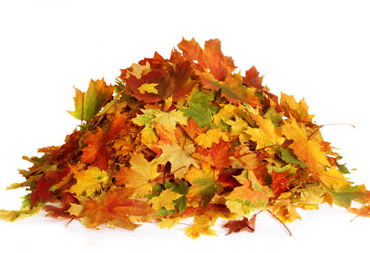 come utilizzare foglie secche